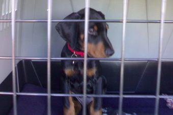 Viajar en avión con mascotas en la cabina: conoce los detalles