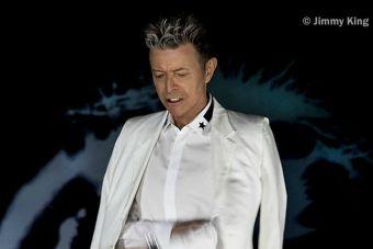 """David Bowie es declarado """"héroe animal"""" por permitir que una de sus canciones se convirtiera en himno contra la caza de delfines"""