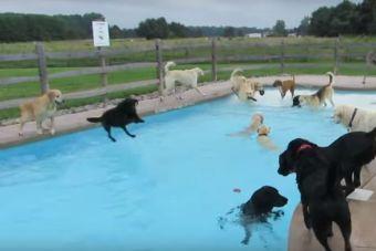 Perros se divierten como nunca en una piscina (video)