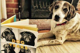 [Fotos] Una fotógrafa muestra el paso del tiempo en los perros