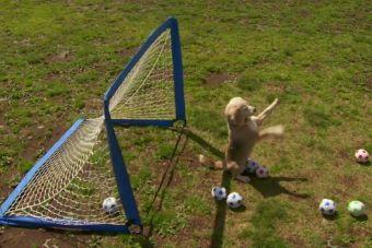 Conoce  Purin, un perro que se hizo famoso como un gran arquero