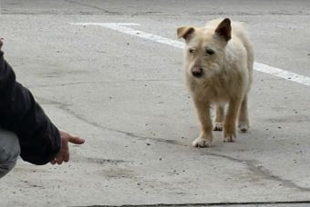 ¿Cómo realizar el rescate exitoso de un perrito abandonado?