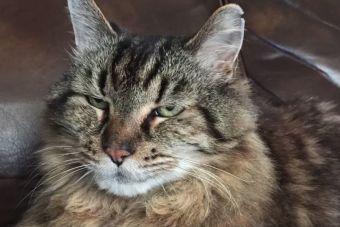 Conoce a Corduroy, el gato más viejo del mundo