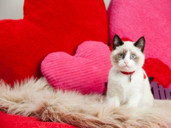 No Regales Animalitos de mascota este Día de los Enamorados