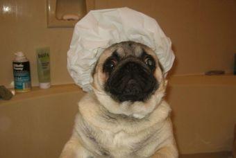 Perros y gatos que no se quieren bañar (video)