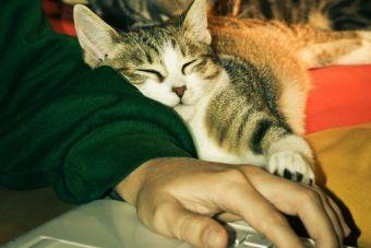 [Video] Los gatos hacen lo que sea para llamar tu atención