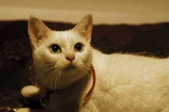 [Video] Mira el trailer de una nueva película que enfrenta a perros y gatos
