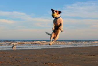 Gracias a un nuevo collar, los perros andarán más frescos