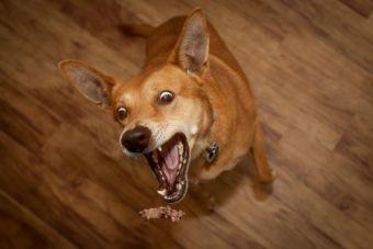 Estados Unidos culpa a marca de comida de mascotas china, de la muerte de 360 animales