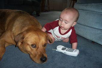 Divertidas situaciones de perros y niños