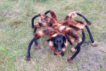 Araña mutante aterroriza la ciudad (video)