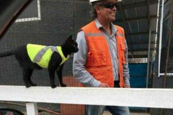 Conoce a Black, el gato obrero de Antofagasta