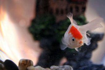 ¿Cómo mantener tu acuario estable?