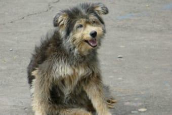Puerto Natales lanza campaña de Tenencia Responsable y un Plan Canino