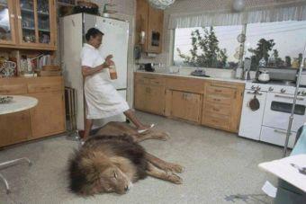 [Fotos] Una familia de Estados Unidos vive junto a un león