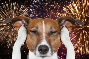 Todo lo que necesitas saber para tener a tu perro a salvo de los Fuegos Artificiales