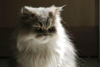 5 acciones que te harán saber si tu gato está enojado