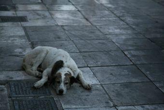 Hombre muere y otro en riesgo vital por defender la vida de un perrito callejero