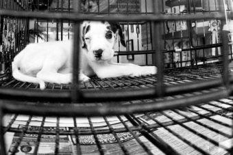 Ley de Estados Unidos solo permite vender mascotas de refugios