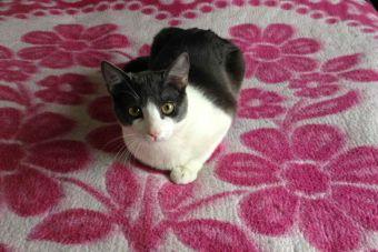 Tao Lennon, un gato un tanto diferente