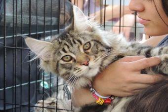 Estudio revela que personas que prefieren gatos como mascotas son más inteligentes