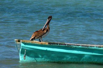 Científicos aseguran que para el 2050, todas las aves marinas habrían comido plástico