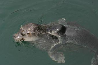 [Video] Crías de focas hacen una fiesta en el agua