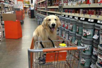 Prohibir o admitir perros en lugares públicos... ¿qué opinas?