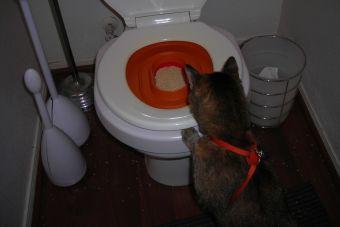 ¿Cómo evitar los cálculos de tu gato?