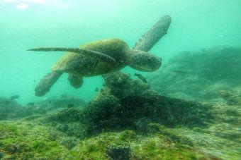 El cambio climático es una amenaza para la conservación de las especies