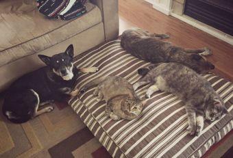Gatos le roban la cama a perros (video)