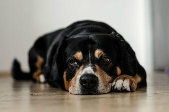 7 consejos para que tu perro no se quede llorando cuando sales