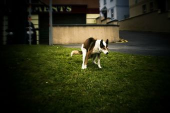 Japoneses crean aplicación para denunciar a quienes no recojan la caca de sus perros