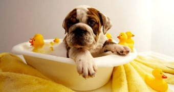 Cuidados para bañar a tu mascota en invierno