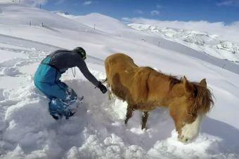 Estudiantes norteamericanos rescatan yegua enterrada en la nieve