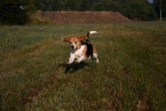¿Cómo los perros pueden volver a la casa?
