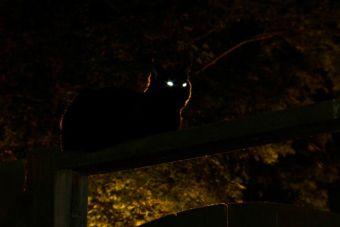 Los gatos tienen muy buena visión de noche