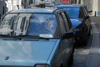 Conoce los riesgos de dejar en un auto a tu mascota