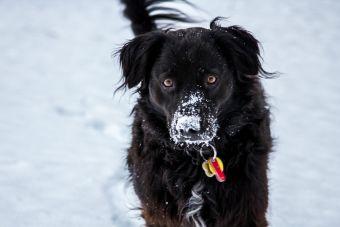 Se viene el frío y tu perro tiene que estar preparado