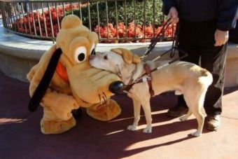 Perros conocen a Pluto en persona (videos)