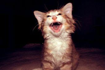 [Video] Los 10 gatos más divertidos de Youtube