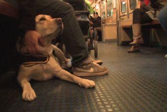 Lazarillos son entrenados para viajar en el transporte de Buenos Aires