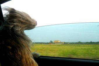 [Video] Un perro trata de morder el viento