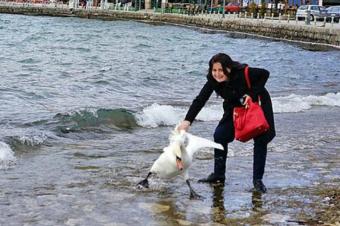 Nuevo caso de turistas maltratadores: Mujer mata a cisne al hacerlo posar para una foto