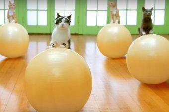 Gatitos nos animan a ponernos en forma con divertido video