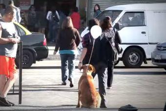 Intervención Urbana de Perritos Abandonados: