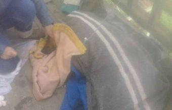 Segundo ataque a perrito del Hospital Pereira en Valparaíso