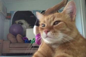 [Video] Gato interrumpe clase de yoga