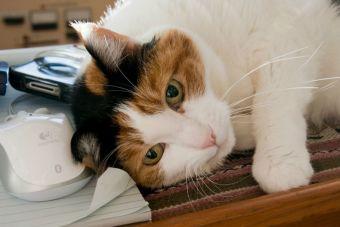 Si vives solo, un gato puede ser tu compañero ideal