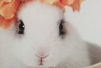 Diputados animalistas presentan proyecto de ley para acabar con el testeo animal en Chile